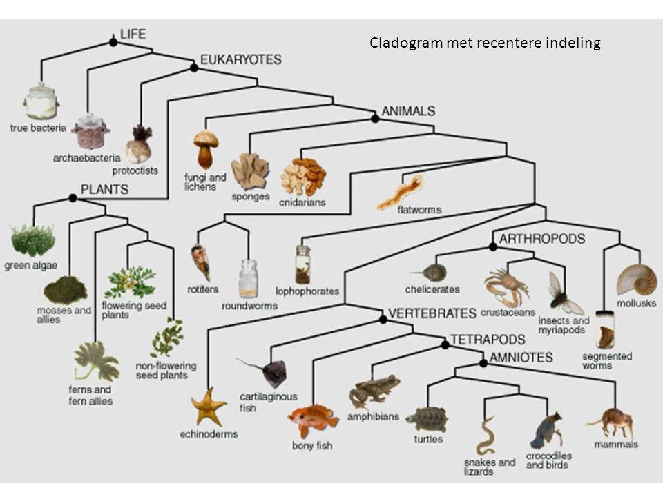Cladogram met recentere indeling