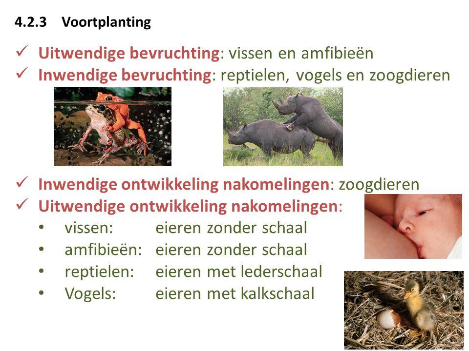 4.2.3Voortplanting Uitwendige bevruchting: vissen en amfibieën Inwendige bevruchting: reptielen, vogels en zoogdieren Inwendige ontwikkeling nakomelin