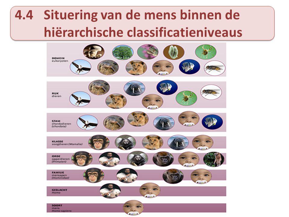 4.4Situering van de mens binnen de hiërarchische classificatieniveaus
