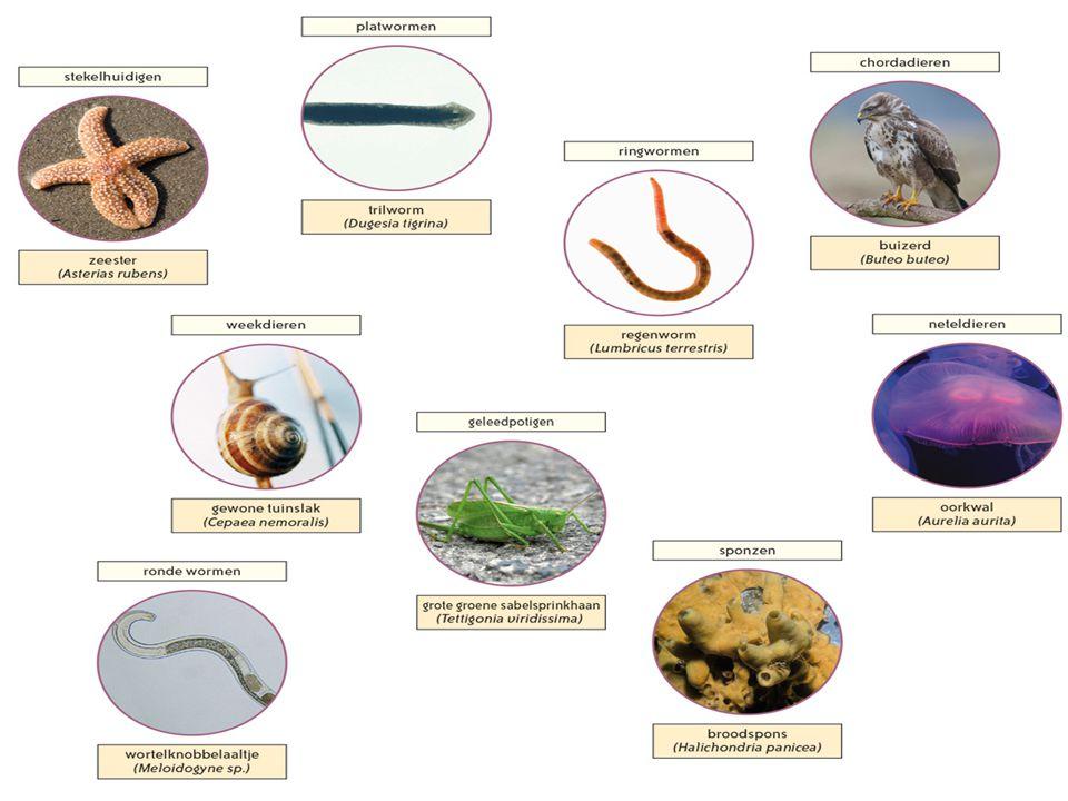2.1Welke lichaamssymmetrie vertoont het dier.