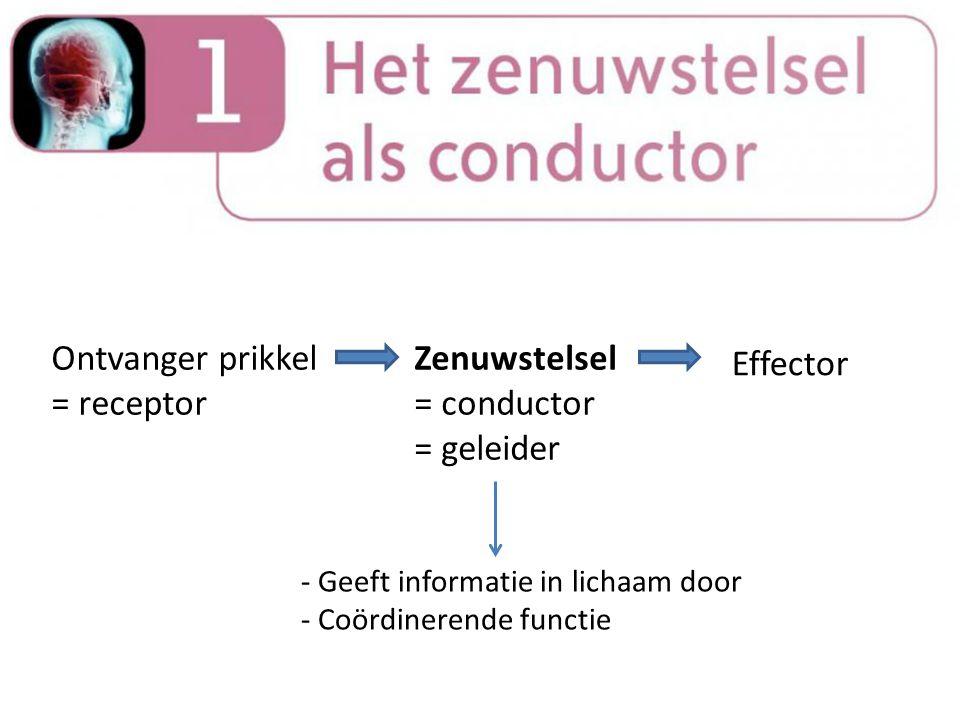 Ontvanger prikkel = receptor Zenuwstelsel = conductor = geleider Effector - Geeft informatie in lichaam door - Coördinerende functie