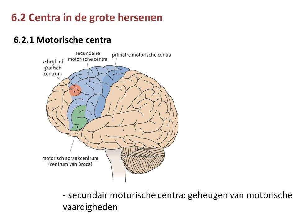 6.2 Centra in de grote hersenen 6.2.1 Motorische centra - secundair motorische centra: geheugen van motorische vaardigheden