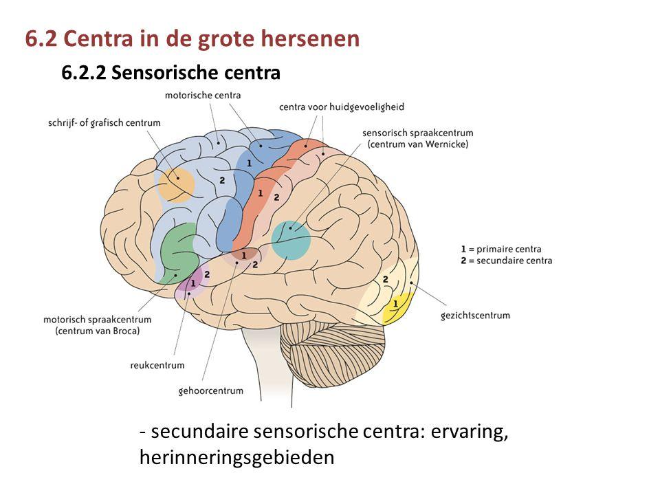 6.2 Centra in de grote hersenen 6.2.2 Sensorische centra - secundaire sensorische centra: ervaring, herinneringsgebieden