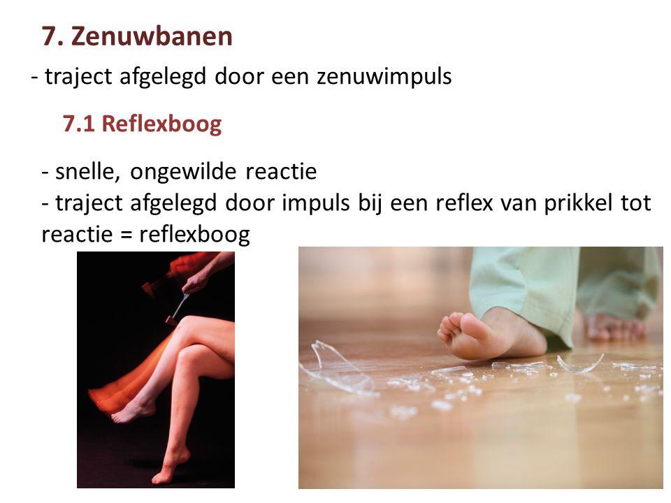 7.1 Reflexboog 7.