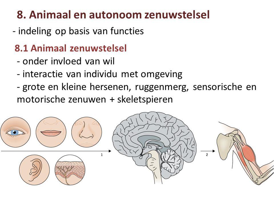 8.1 Animaal zenuwstelsel 8.