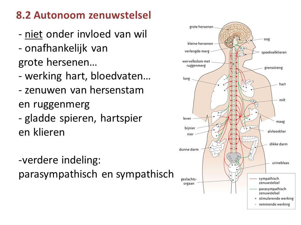 8.2 Autonoom zenuwstelsel - niet onder invloed van wil - onafhankelijk van grote hersenen… - werking hart, bloedvaten… - zenuwen van hersenstam en ruggenmerg - gladde spieren, hartspier en klieren -verdere indeling: parasympathisch en sympathisch
