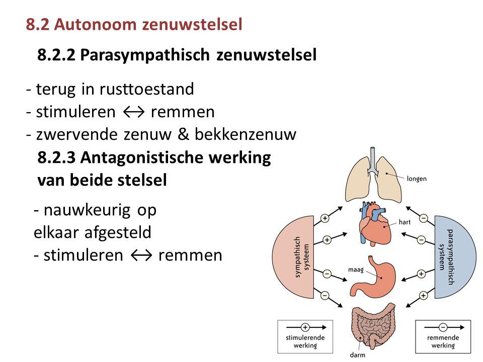 8.2 Autonoom zenuwstelsel - terug in rusttoestand - stimuleren ↔ remmen - zwervende zenuw & bekkenzenuw 8.2.2 Parasympathisch zenuwstelsel 8.2.3 Antagonistische werking van beide stelsel - nauwkeurig op elkaar afgesteld - stimuleren ↔ remmen