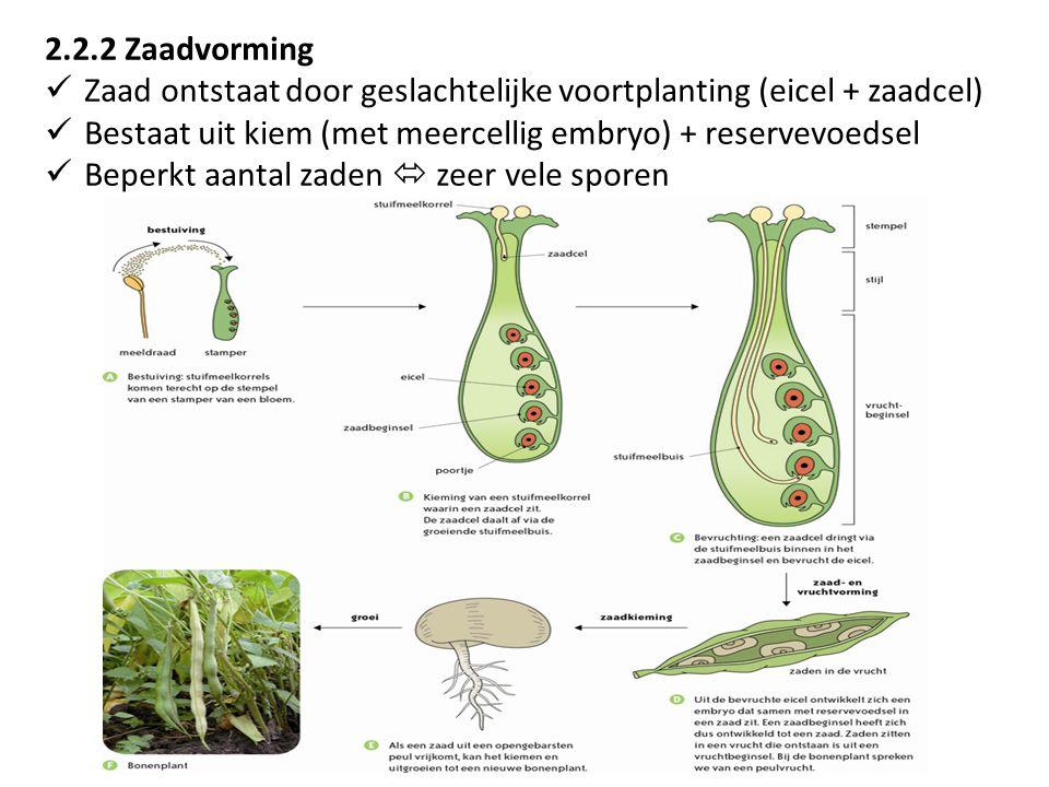 2.2.2 Zaadvorming Zaad ontstaat door geslachtelijke voortplanting (eicel + zaadcel) Bestaat uit kiem (met meercellig embryo) + reservevoedsel Beperkt