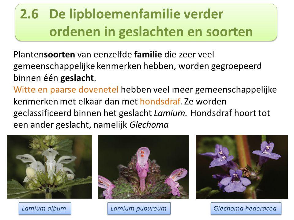 2.6De lipbloemenfamilie verder ordenen in geslachten en soorten Plantensoorten van eenzelfde familie die zeer veel gemeenschappelijke kenmerken hebben