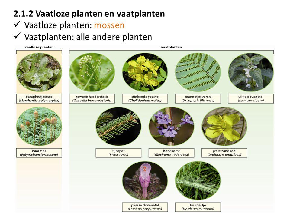 2.1.2 Vaatloze planten en vaatplanten Vaatloze planten: mossen Vaatplanten: alle andere planten