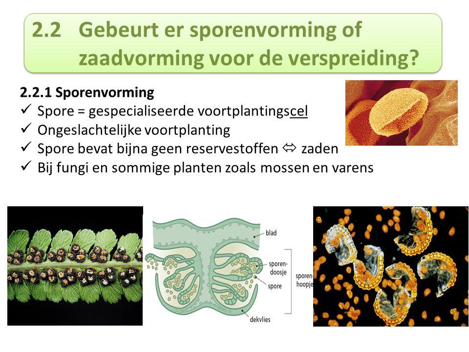 2.2.2 Zaadvorming Zaad ontstaat door geslachtelijke voortplanting (eicel + zaadcel) Bestaat uit kiem (met meercellig embryo) + reservevoedsel Beperkt aantal zaden  zeer vele sporen