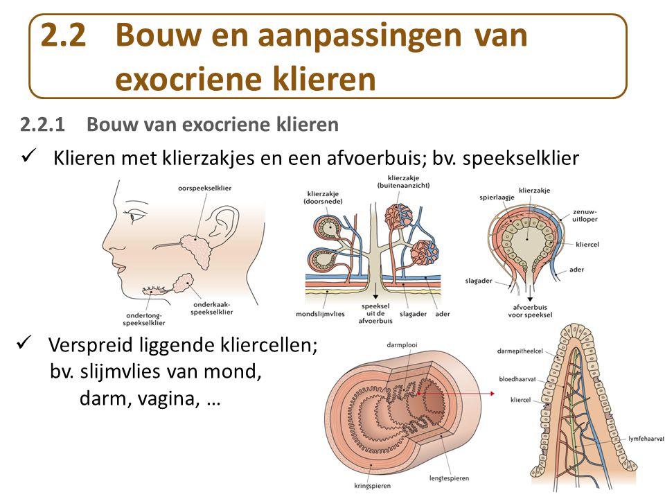 2.2 Bouw en aanpassingen van exocriene klieren Klieren met klierzakjes en een afvoerbuis; bv.