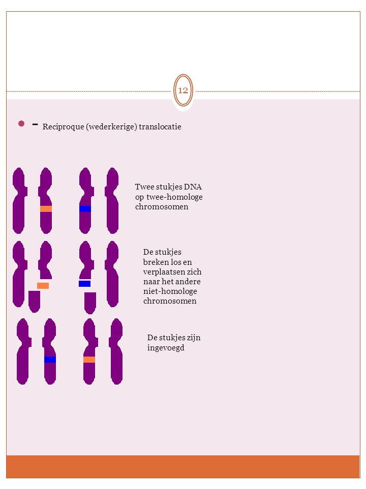 - Reciproque (wederkerige) translocatie Twee stukjes DNA op twee-homologe chromosomen De stukjes breken los en verplaatsen zich naar het andere niet-h