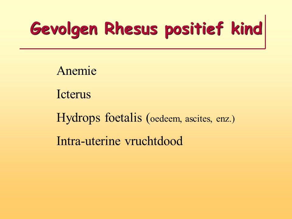Gevolgen Rhesus positief kind Anemie Icterus Hydrops foetalis ( oedeem, ascites, enz.) Intra-uterine vruchtdood