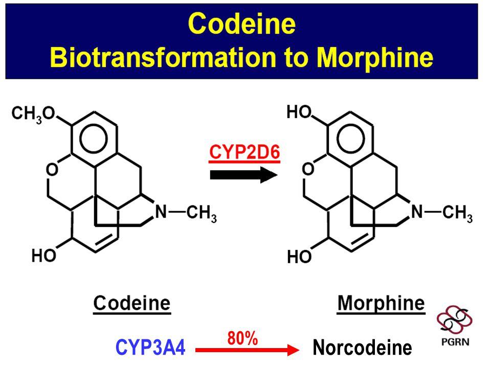 CYP3A4Norcodeine 80%