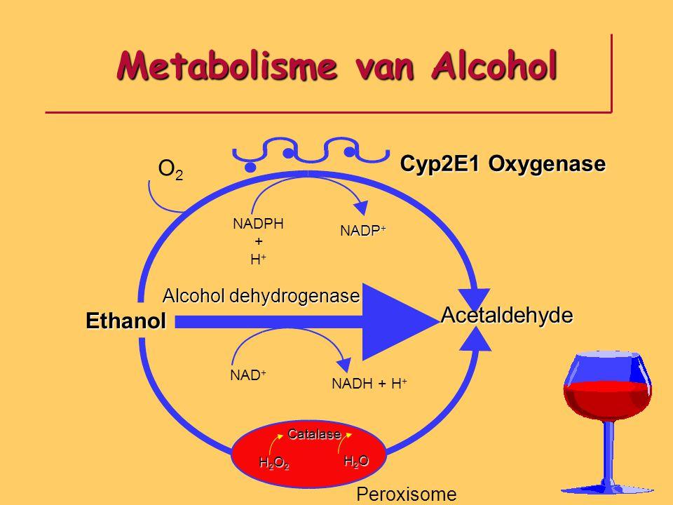 O2O2 Ethanol Acetaldehyde NAD + NADH + H + Catalase H2O2H2O2H2O2H2O2 H2OH2OH2OH2O NADPH + H + ADP + NADP + Alcohol dehydrogenase Cyp2E1 Oxygenase Pero