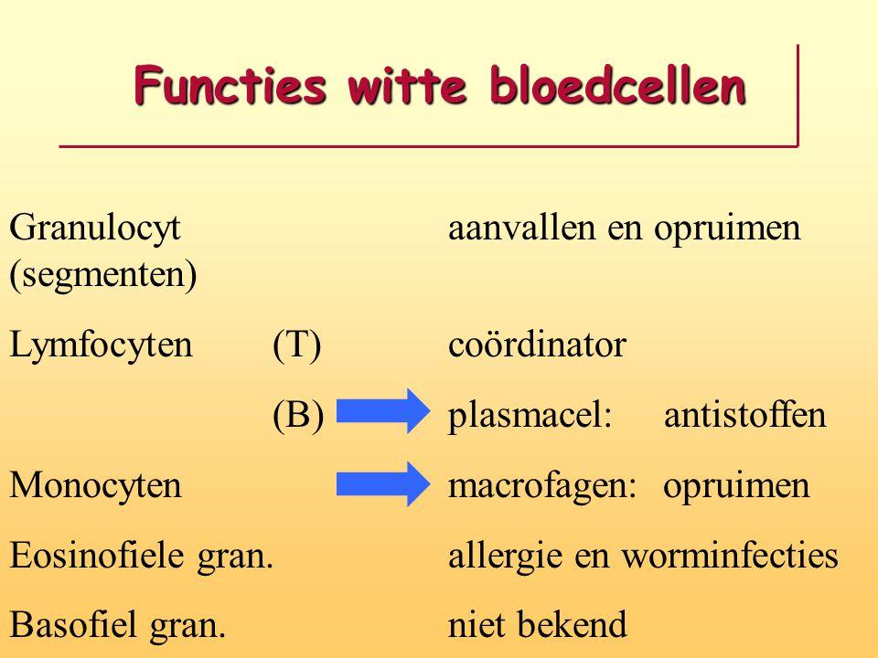 Functies witte bloedcellen Granulocyt aanvallen en opruimen (segmenten) Lymfocyten(T)coördinator (B) plasmacel: antistoffen Monocytenmacrofagen: opruimen Eosinofiele gran.allergie en worminfecties Basofiel gran.niet bekend