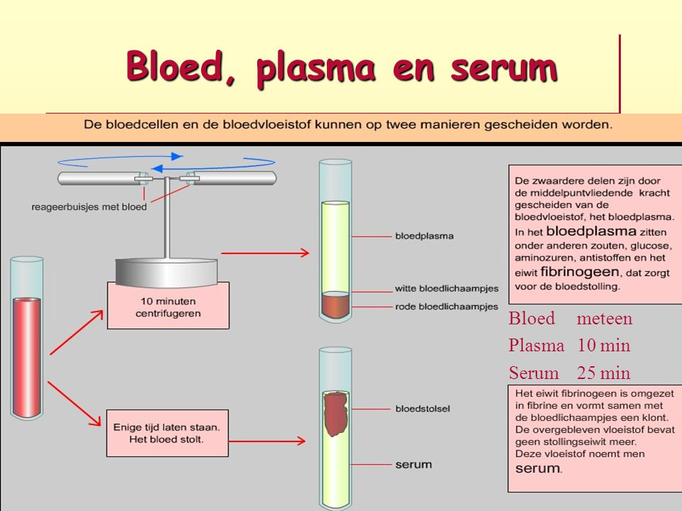 Anemie Erytrocyten verlaagd Hemoglobine verlaagd Hematocriet verlaagd Hct x 20 = Hb Ery's x 2 = Hb Ery's : 10 = Hct Hemoglobine verlaagd bij Mannen < 8,5 mmol/l Vrouwen < 7,5 mmol/l