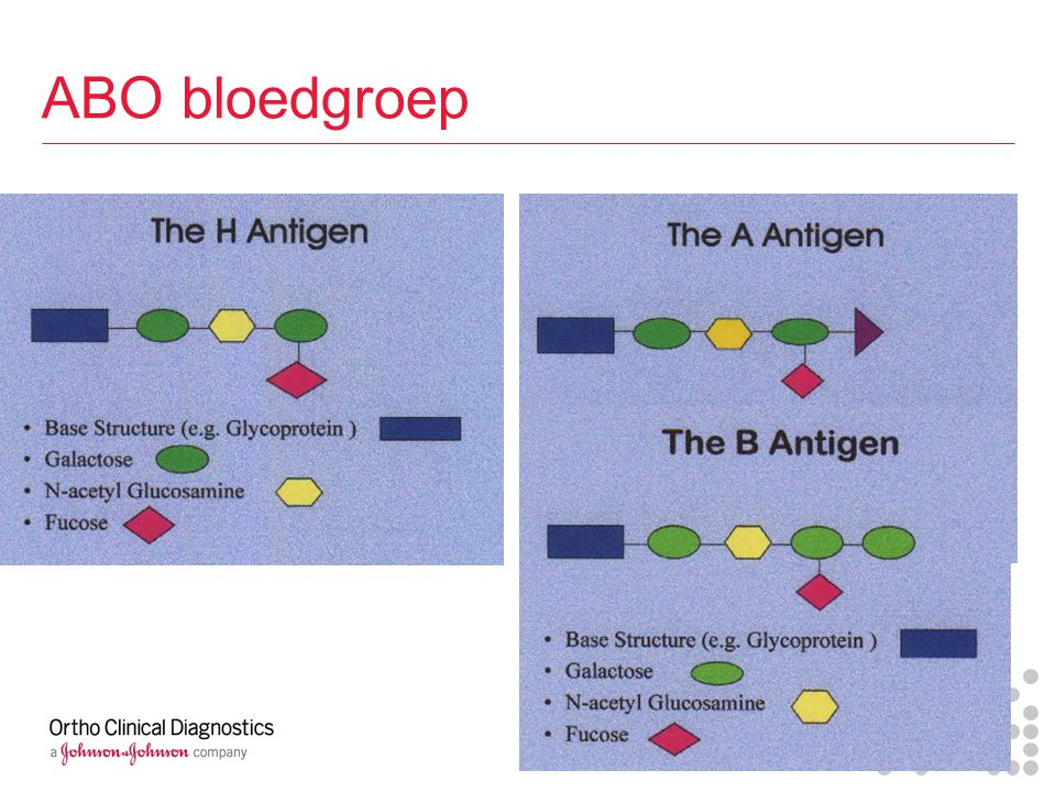 ABO bloedgroep