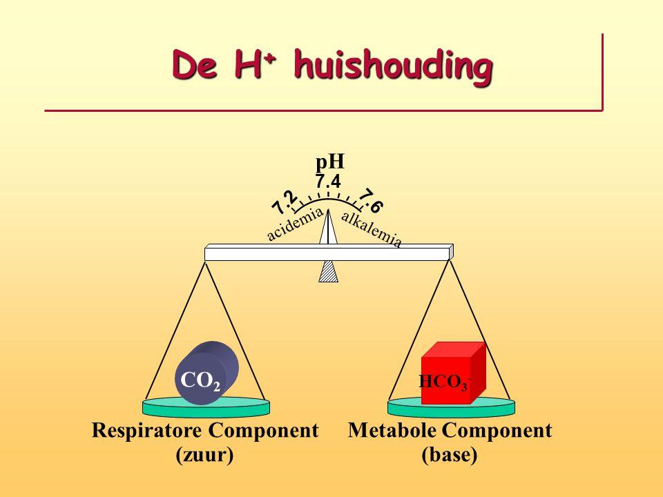 Respiratoire regulatie CO 2 gas  CO 2 + H 2 O  H 2 CO 3  H + + HCO 3 - Ademhaling  CO 2   H 2 CO 3  H +  + HCO 3 - Ademhaling  CO 2  H 2 CO 3  H +  + HCO 3 -