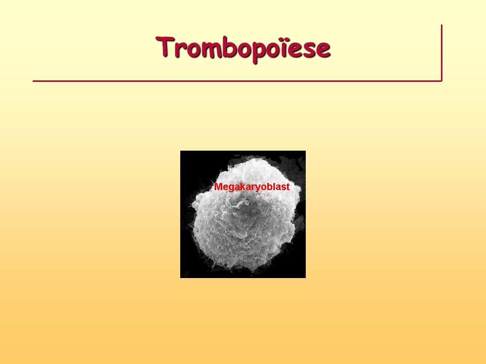 Trombopoïese
