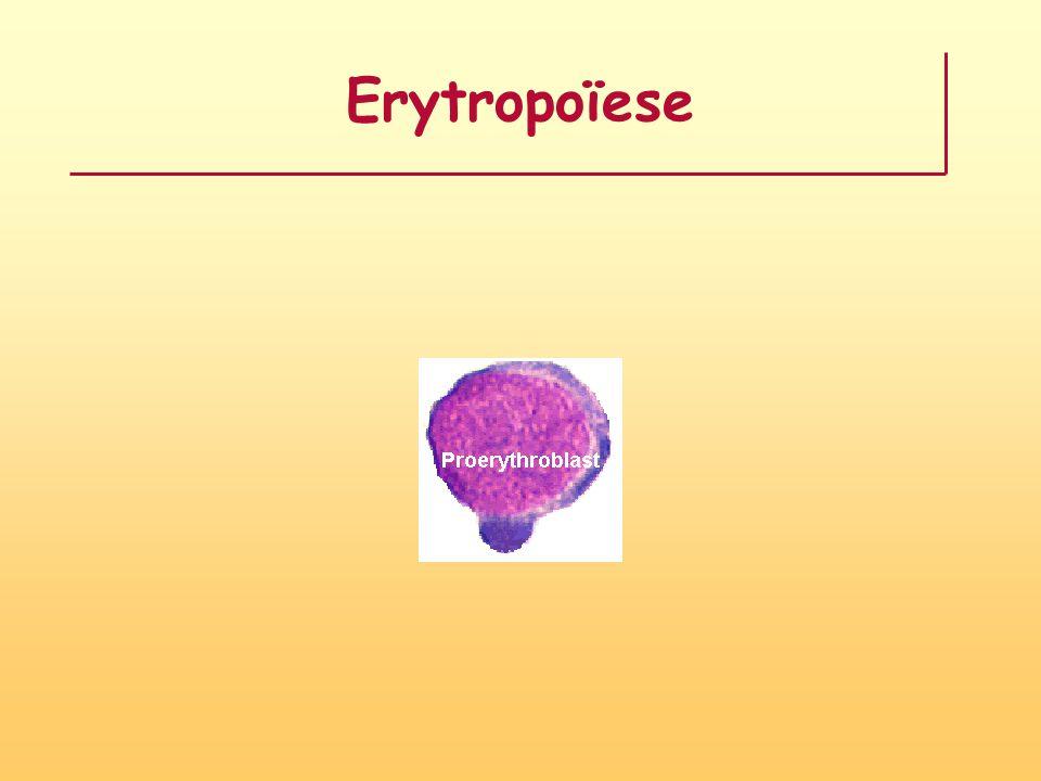 Selectiecriteria CBC mode Soort cellen: ery's, trombo's, leucocyten Aantal cellen: verhoogd of verlaagd Volume cellen: verhoogd of verlaagd Inhoud cellen: verhoogd of verlaagd Rare cellen Jonge cellen (RDW, STD) Kleine + grote cellen (spreiding, RDW, STD) Klonteringen Combinaties