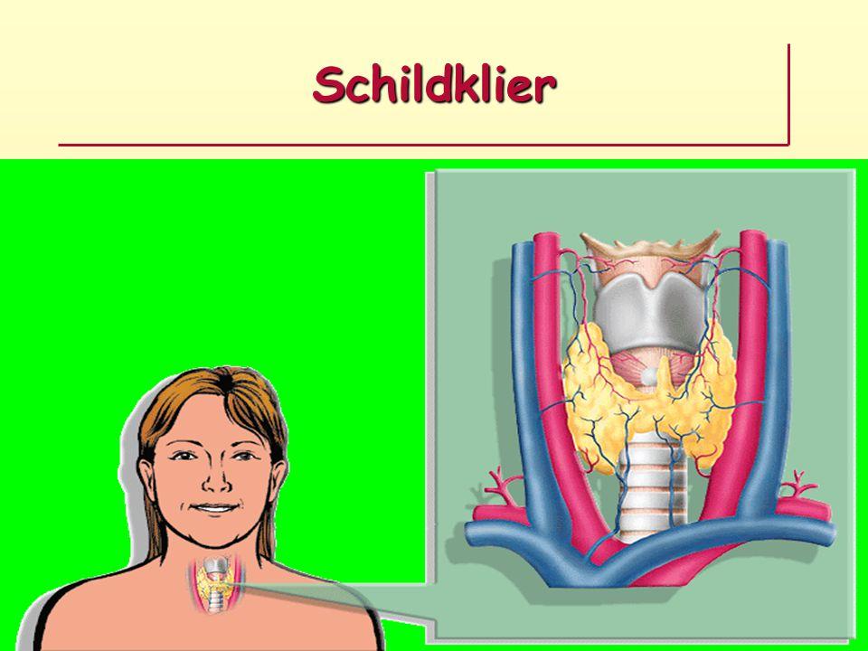 Schildklier hormonen