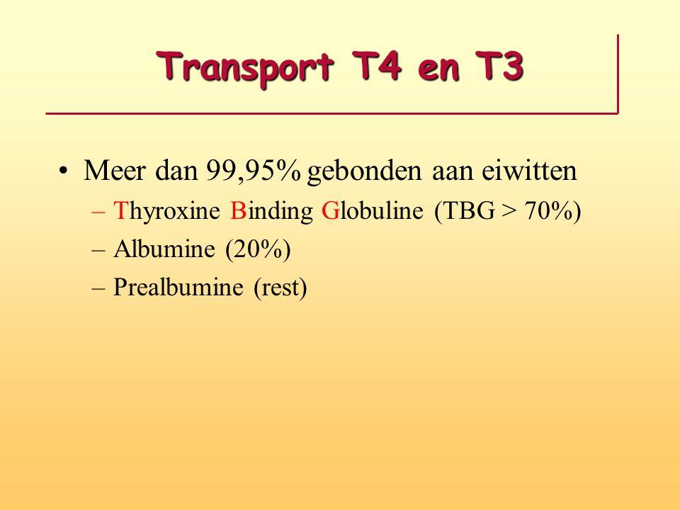 Transport T4 en T3 Meer dan 99,95% gebonden aan eiwitten –Thyroxine Binding Globuline (TBG > 70%) –Albumine (20%) –Prealbumine (rest)