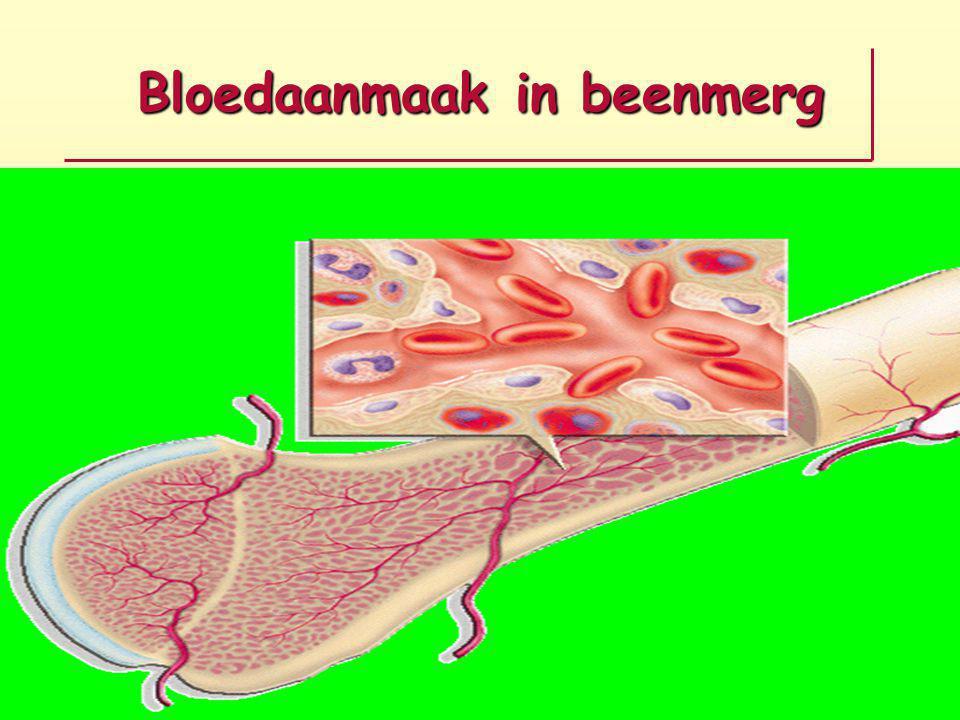 Bloedaanmaak in beenmerg