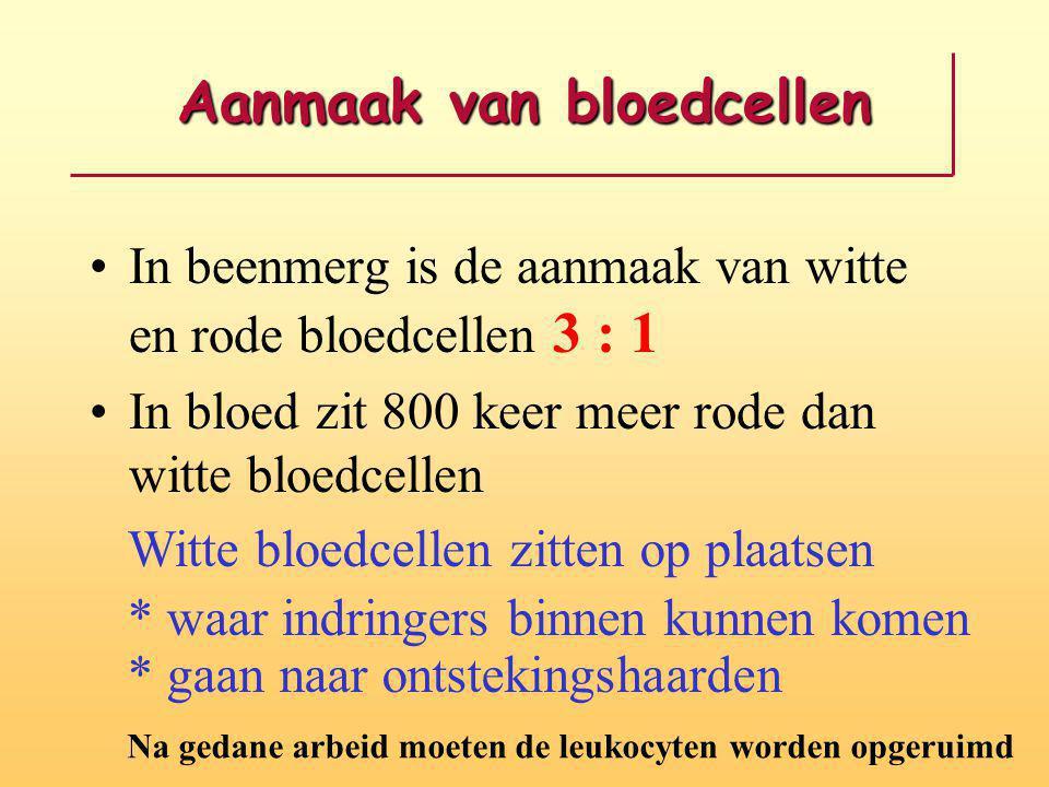 Aanmaak van bloedcellen In beenmerg is de aanmaak van witte en rode bloedcellen 3 : 1 In bloed zit 800 keer meer rode dan witte bloedcellen Witte bloe