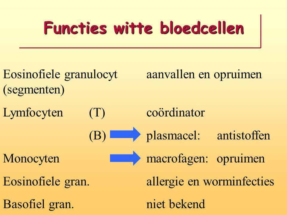 Functies witte bloedcellen Eosinofiele granulocyt aanvallen en opruimen (segmenten) Lymfocyten(T)coördinator (B) plasmacel: antistoffen Monocytenmacro