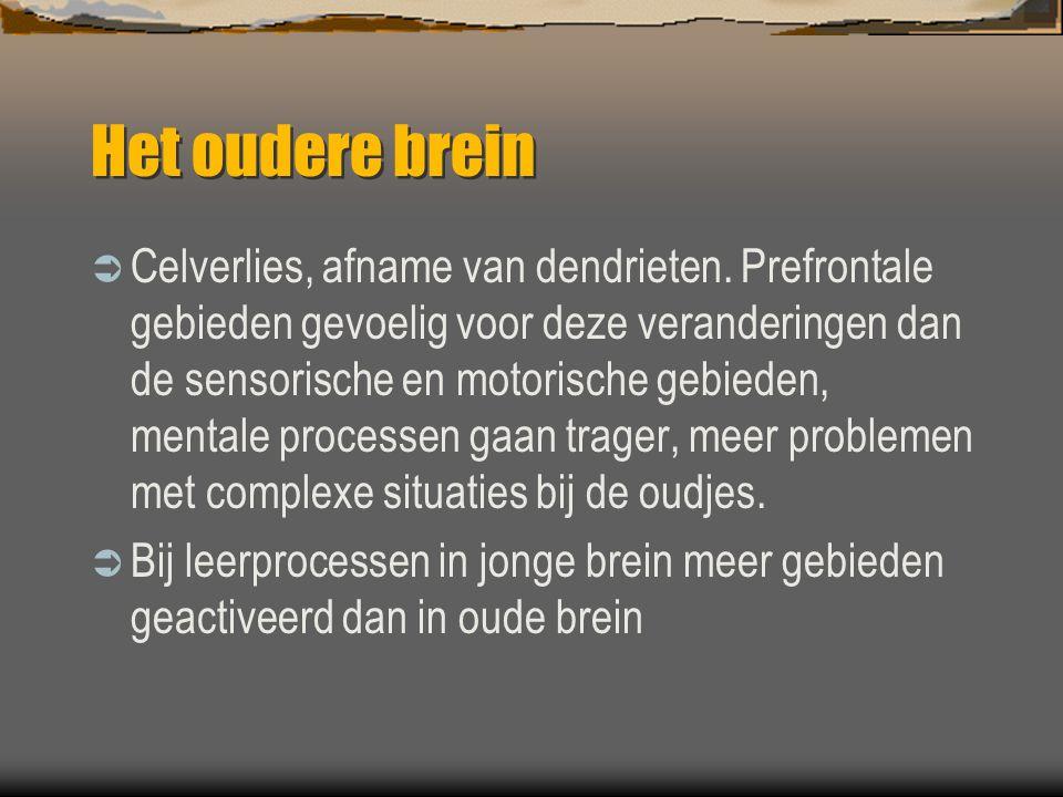 Het oudere brein  Celverlies, afname van dendrieten.