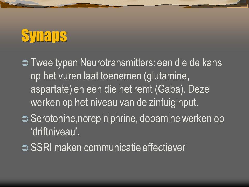Synaps  Twee typen Neurotransmitters: een die de kans op het vuren laat toenemen (glutamine, aspartate) en een die het remt (Gaba).