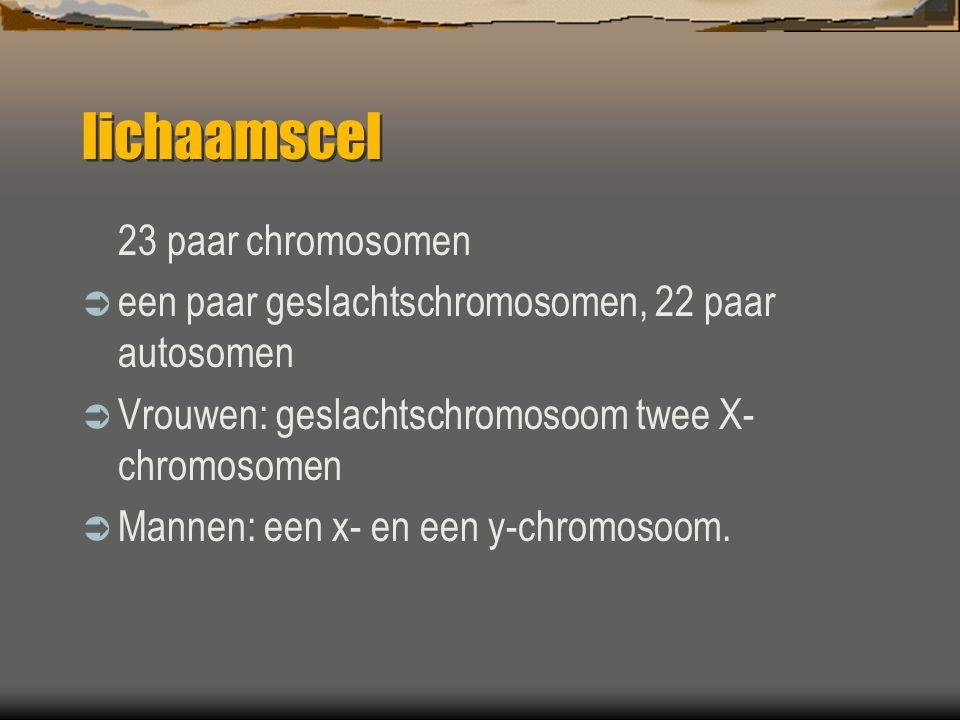 lichaamscel 23 paar chromosomen  een paar geslachtschromosomen, 22 paar autosomen  Vrouwen: geslachtschromosoom twee X- chromosomen  Mannen: een x- en een y-chromosoom.