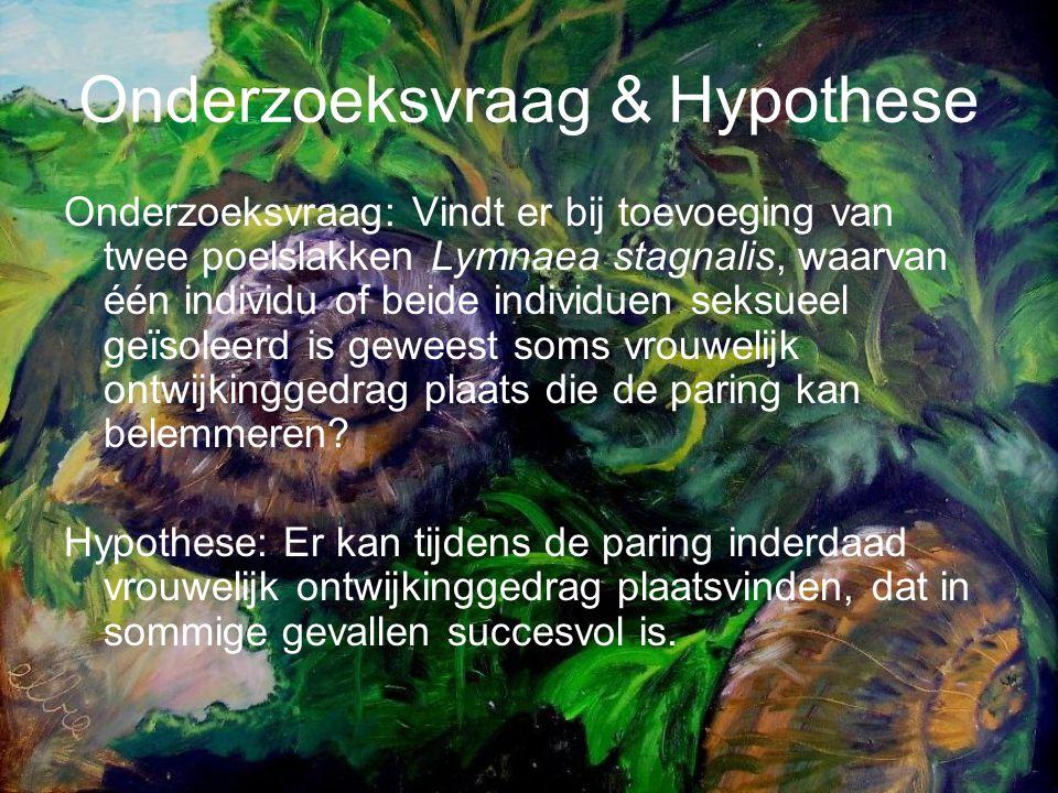 Onderzoeksvraag & Hypothese Onderzoeksvraag: Vindt er bij toevoeging van twee poelslakken Lymnaea stagnalis, waarvan één individu of beide individuen seksueel geïsoleerd is geweest soms vrouwelijk ontwijkinggedrag plaats die de paring kan belemmeren.