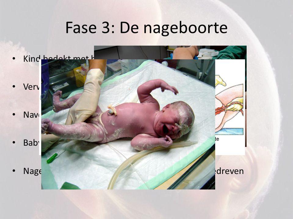 Fase 3: De nageboorte Kind bedekt met huidsmeer (bescherming) Verwijdering slijm uit de mond, neus en longen Navelstreng afgeklemd en doorgeknipt Baby