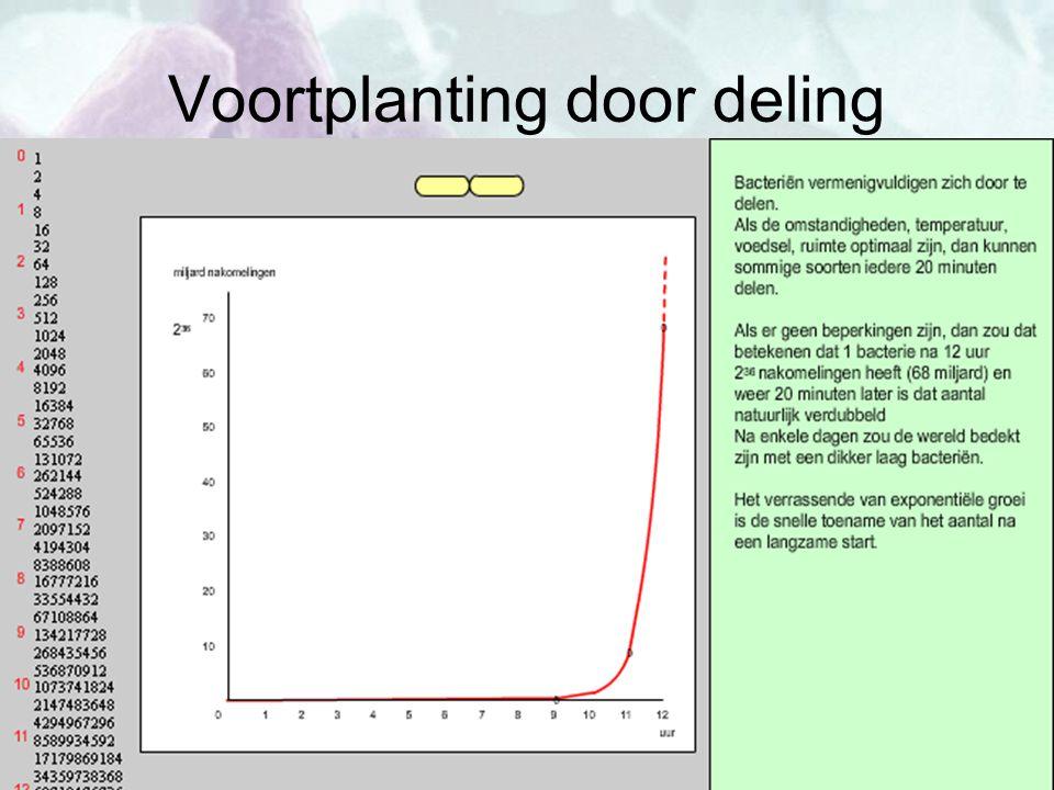 Voortplanting door deling