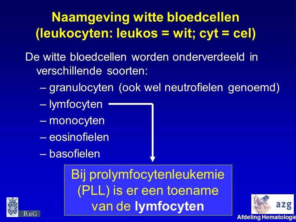 Afdeling Hematologie umcg Naamgeving witte bloedcellen (leukocyten: leukos = wit; cyt = cel) De witte bloedcellen worden onderverdeeld in verschillend