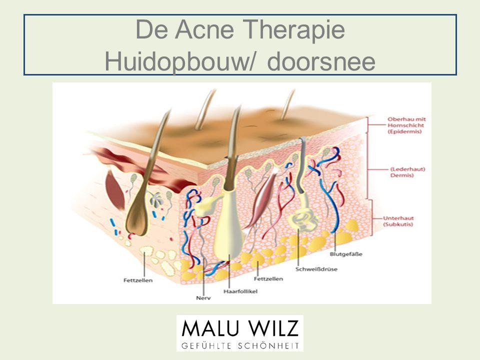De Acne Therapie nieuwe werkstoffen Enzymcomplex: Eiwit splitsende Enzymen om op milde wijze de verhoorningen te verweken.