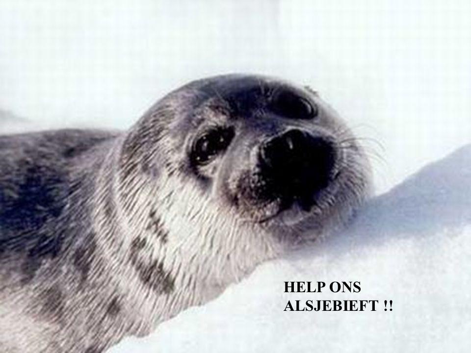 HELP ONS ALSJEBIEFT !!