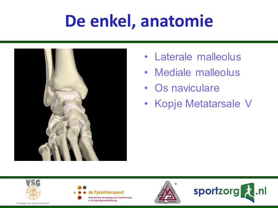 Laterale malleolus Mediale malleolus Os naviculare Kopje Metatarsale V De enkel, anatomie