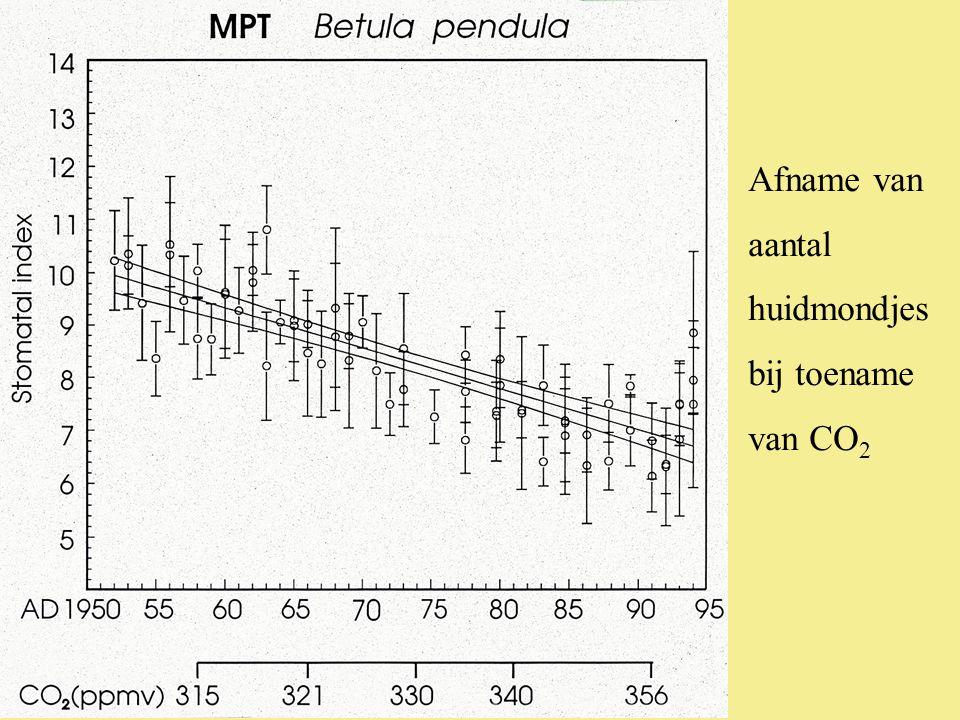 Afname van aantal huidmondjes bij toename van CO 2