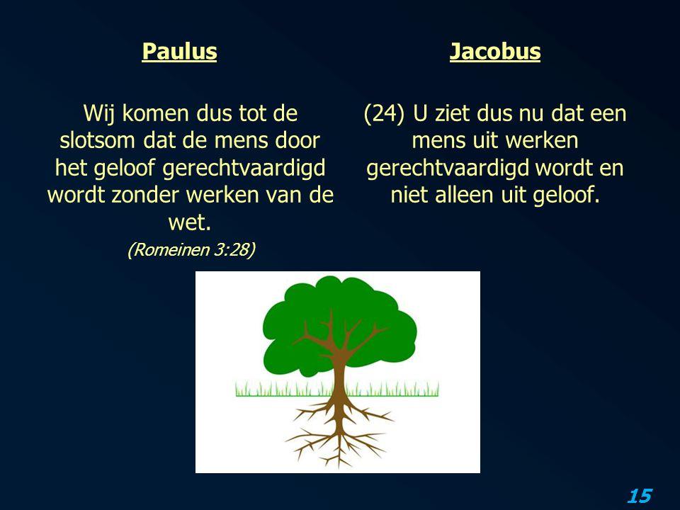 15 Paulus Wij komen dus tot de slotsom dat de mens door het geloof gerechtvaardigd wordt zonder werken van de wet.