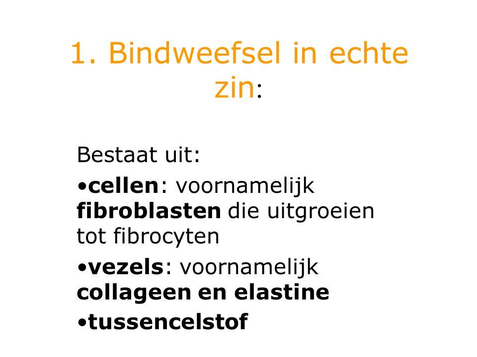 b) Bindweefsel Bestaat uit losse verbanden van cellen in een tussenstof Soorten: bindweefsel in echte zin vetweefsel kraakbeenweefsel beenweefsel