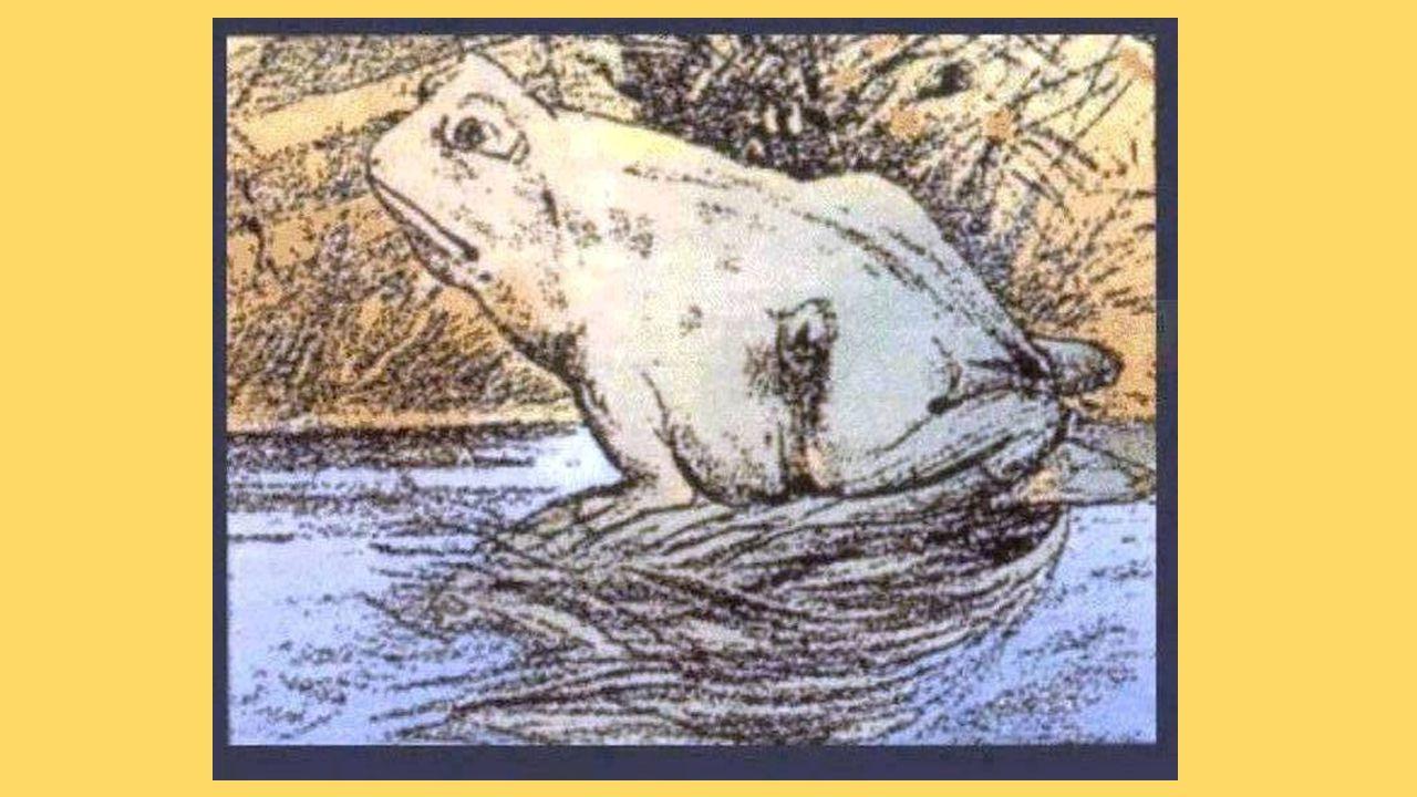 Genesis 37:2-4 2 Jozef, die inmiddels zeventien jaar was, weidde gewoonlijk samen met zijn broers de schapen en geiten; hij hielp de zonen van zijn vaders vrouwen Bilha en Zilpa, en alle praatjes die over zijn broers de ronde deden vertelde hij aan hun vader door.
