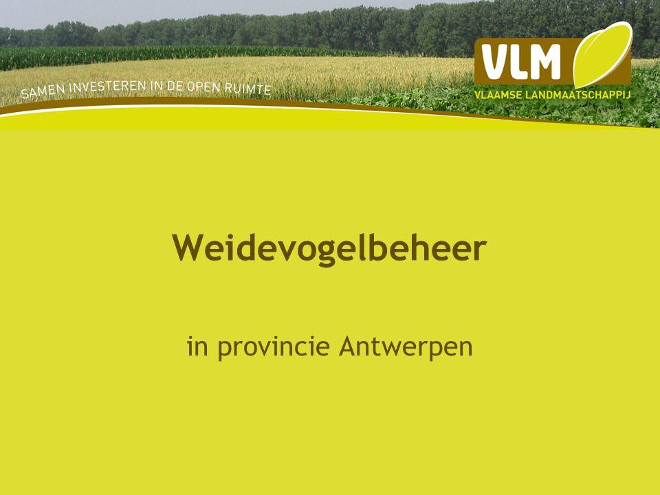 Weidevogelbeheer in provincie Antwerpen