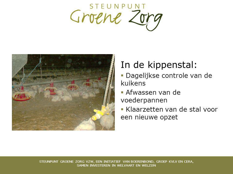 In de kippenstal:  Dagelijkse controle van de kuikens  Afwassen van de voederpannen  Klaarzetten van de stal voor een nieuwe opzet STEUNPUNT GROENE