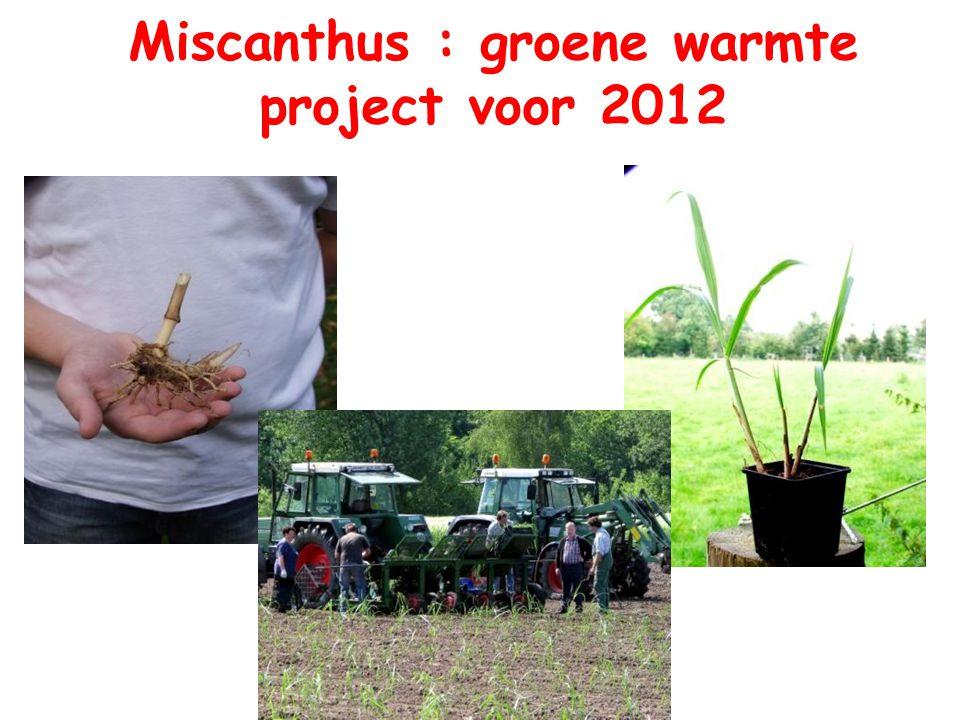 Miscanthus : groene warmte project voor 2012
