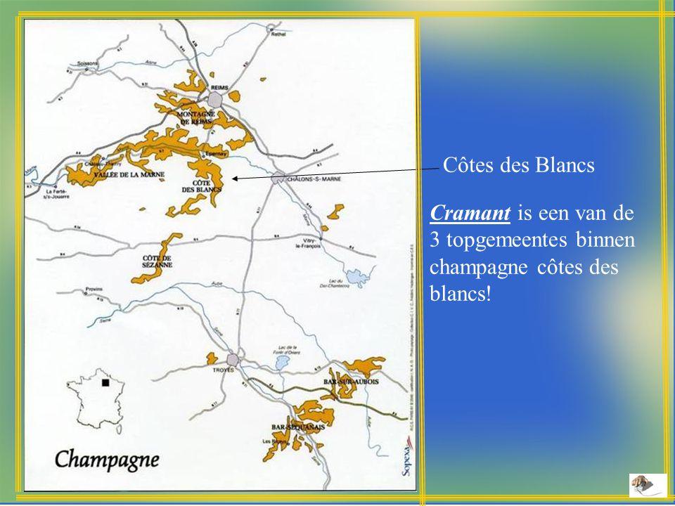 Côtes des Blancs Cramant is een van de 3 topgemeentes binnen champagne côtes des blancs!