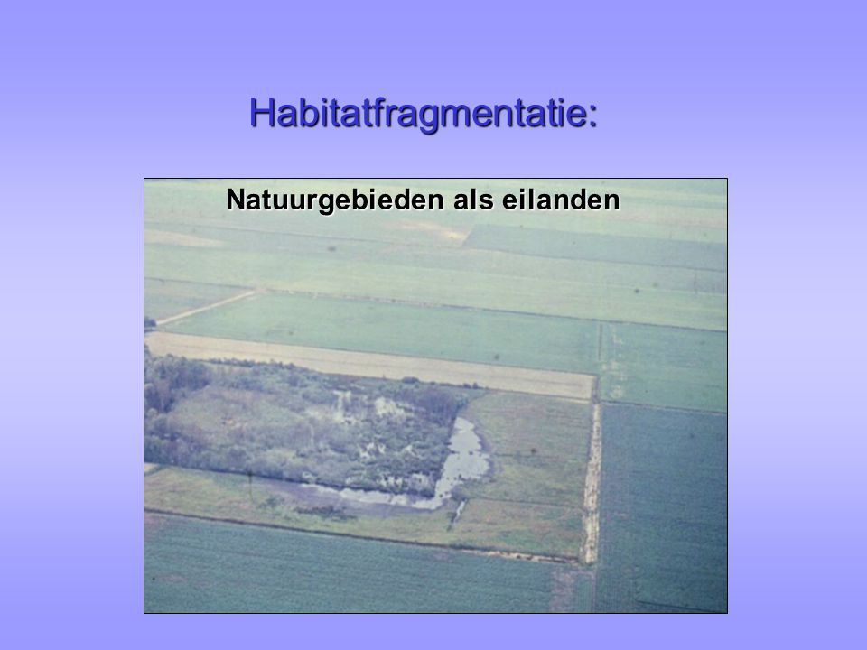 Habitatfragmentatie: Natuurgebieden als eilanden
